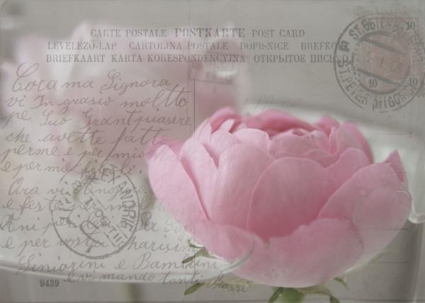 "Karte ""Wasserrose"""