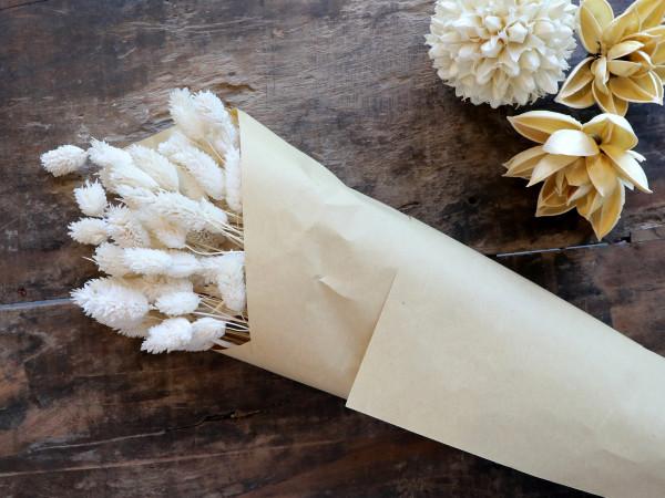 Getrocknete Phalarisblüte, Chic Antique